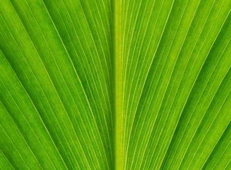 Green leaf texture background Stock Photo