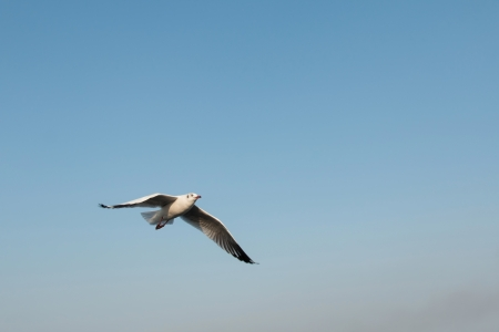 Seagull with blue sky background photo