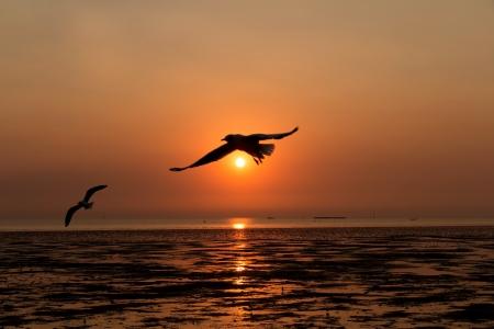 Birds in sunset sky Stock Photo