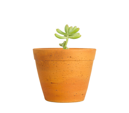 Young plant in pot isolated on white