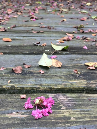 Old wooden decks full of fallen flowers and dry leaves.