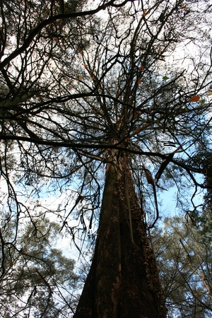 Crown of the tree with clear sky in Alfred Nicholas Gardens photo