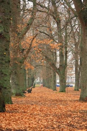 peaceful autumn in new zealand park