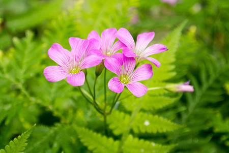 A beautiful wild pink flower. Stock Photo