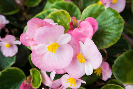 pink flowers with green leaf