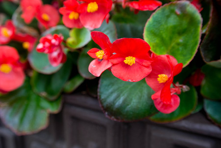 Fresh colorful flowers in pots Stock Photo