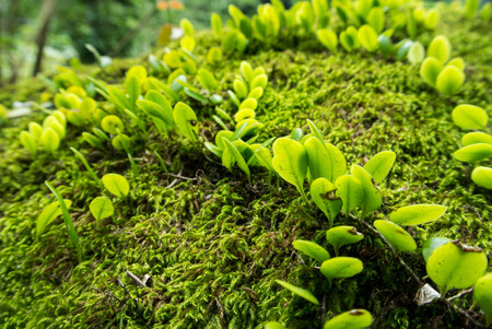 Moss on stone and ivy - close-up.