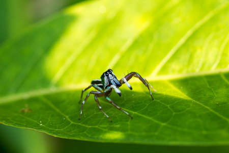 arachnophobia: spider on leaf in the park