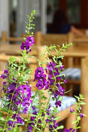 ガーデン テーブルと椅子 写真素材