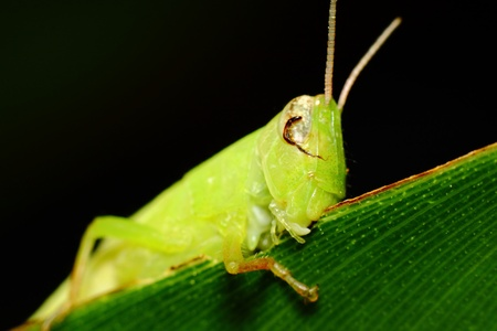 grasshopper on the leaf Stock Photo