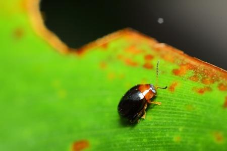 bug on leaf Stock Photo - 10361225