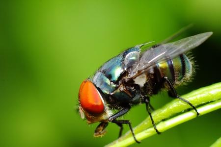 fly macro on leaf