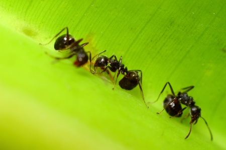 葉の上のアリ
