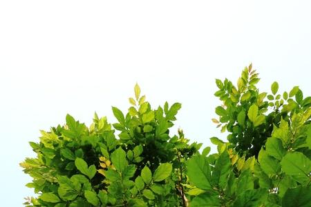 自然の背景を葉します。