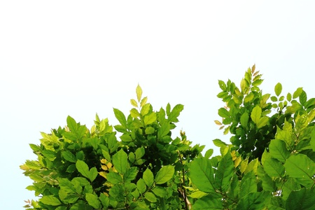 Nature Background With Leafs Stock Photo