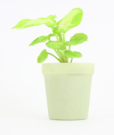 Small plant in a bioplastic pot