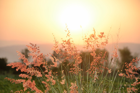 eventide: sunset and grass