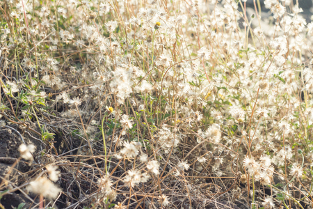 wayside: Grass flowers wayside in summer Stock Photo
