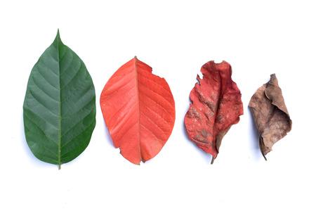 Diseño creativo de coloridas hojas de otoño. Endecha plana. Concepto de temporada aislado en fondo blanco