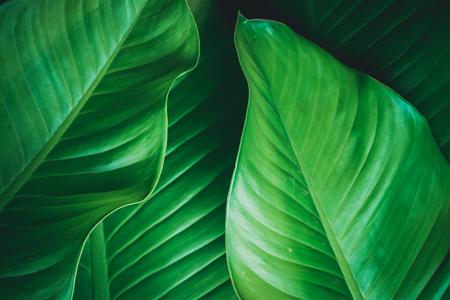 green leaves dark nature background