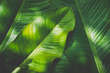 Low key green leafs dark nature background