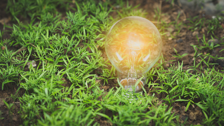 Light bulb growing on the ground in the garden, innovative idea for nature concept