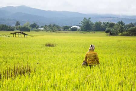 Farmer walking in rice field ,countryside of Thailand