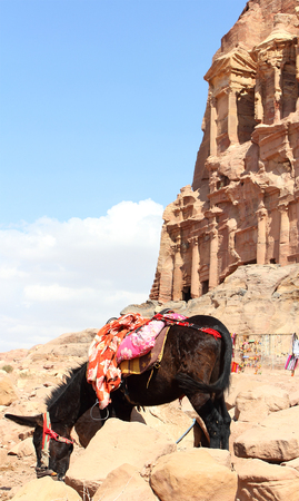 archaeologically: lone donkey near ancient nabatean ruins in city Petra, Jordan, November 2012
