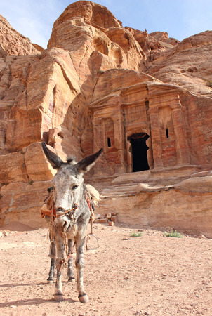 archaeologically: lone grey donkey near ancient nabatean ruins, Petra, Jordan, November 2012 Stock Photo
