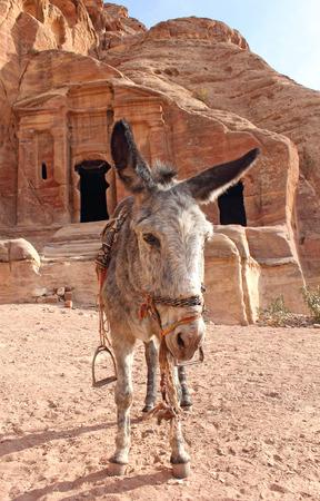 archaeologically: lone donkey stay near ancient nabatean ruins, Petra, Jordan, November 2012