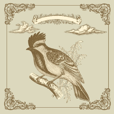 french style: Retro card with bird