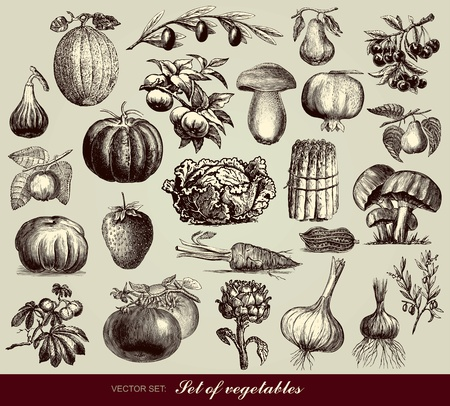 pumpkin tomato: set of vegetables Illustration