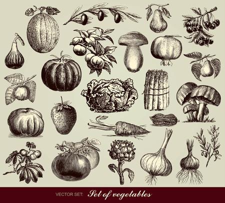 pomegranate: set of vegetables Illustration