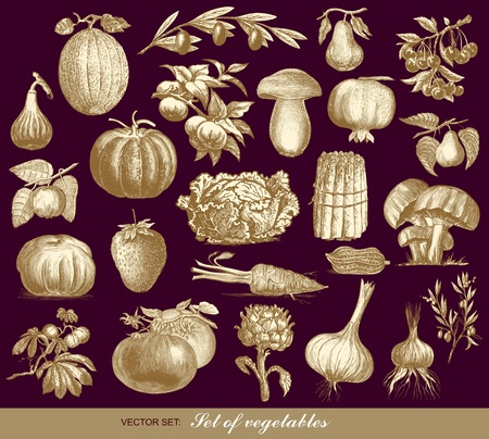 set of vegetables Stock Vector - 10159531