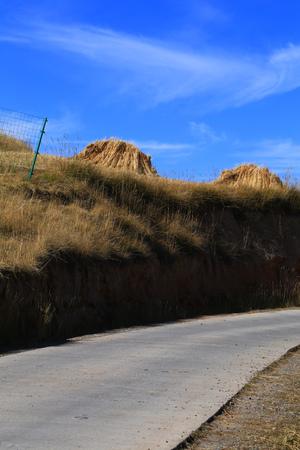 thatcher: Thatcher Hill harvest