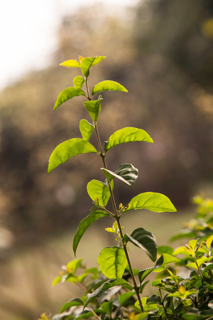taller: green plant under the sunshine Stock Photo