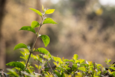 taller: green plant under the sunshine Stock Photo