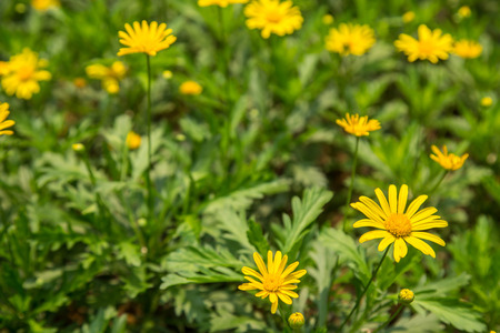 yellow: yellow flowers