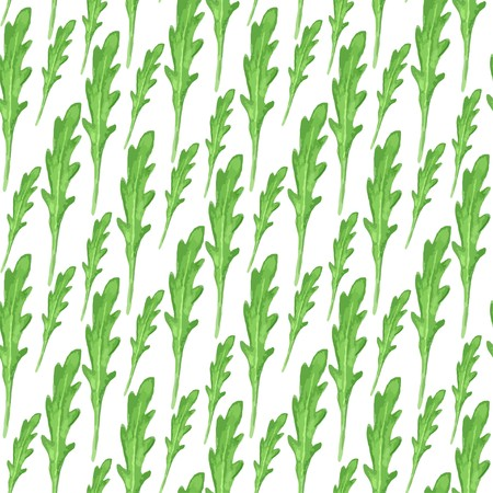 potherb: Watercolor seamless pattern with green leaves of arugula on white background. Hand paint vector illustration