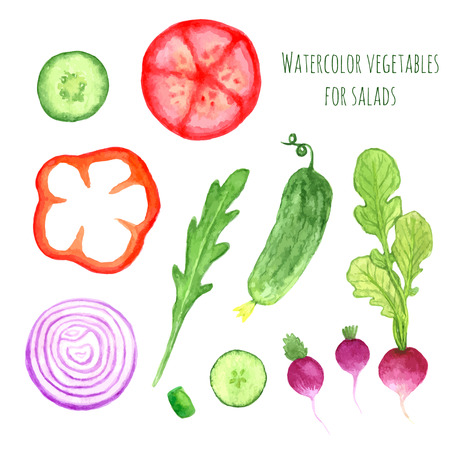 Hand paint watercolor vector vegetables set eat local farm market rustic illustrations with a arugula, onion, pepper, cucumber, tomato, radish. Summer ingredients collection  for salads Illustration