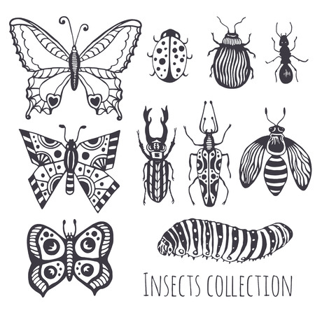 Collection of hand drawind insects,  Cute set of decoration for design, icons, logo or print. Vector illustration Vector