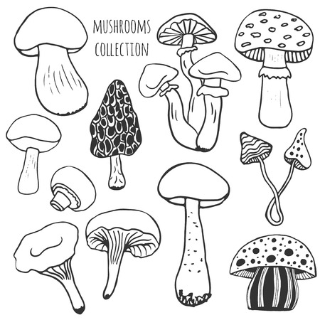 mushroom soup: Hand drawn mushrooms collection. Doodle vector set with edible and poison mushrooms Illustration