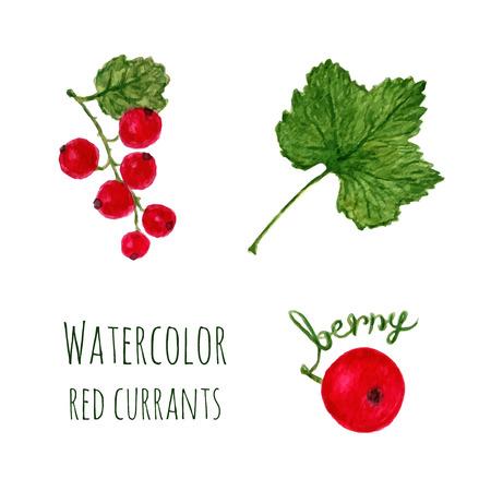 レッドカラント: 赤スグリ、葉、ベリーは、白い背景で隔離の枝と水彩イラスト。ベクトル オブジェクトの設定  イラスト・ベクター素材