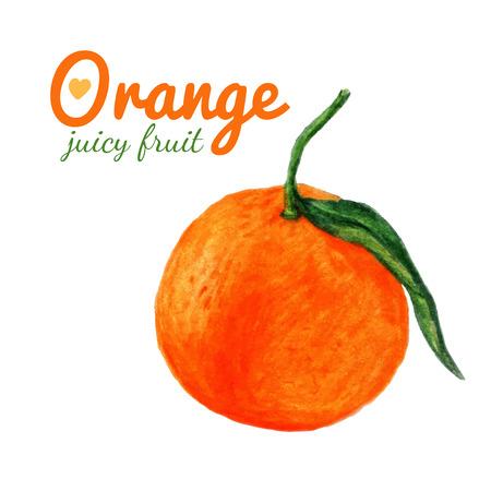 exotic fruit: Watercolor orange fruit.  Citrus. Recent watercolor paintings of organic food. Fresh exotic fruit. Illustration