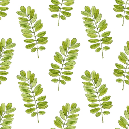 verdant: Watercolor seamless pattern with acacia leaves. Hand drawn vector background for packaging, textile and other design
