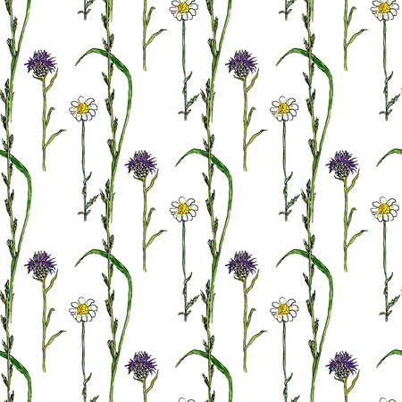 herbal background: Watercolor seamless pattern with wild flowers. Medecine herbal background. Vector hand drawn illustration Illustration