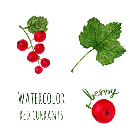 red currant: Watercolor illustration with branch of red currant, leaf and berry isolated on a white background. Vector set objects