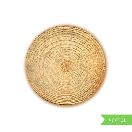 white wood: Tree stump, round cut with annual rings vector. Wooden cross section. Vector illustration. Realistic isolated circle tree can be used for icon, sticker, label, backdrop