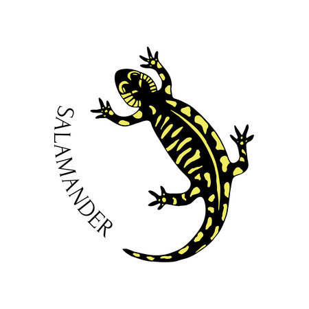 gaudy: Hand drawn salamander in black and yellow color. Vector for tattoo art or logo.