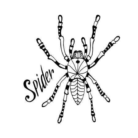 arachnophobia: Spider in zentangle style. Vector hand drawn doodle sketch for tattoo, print.